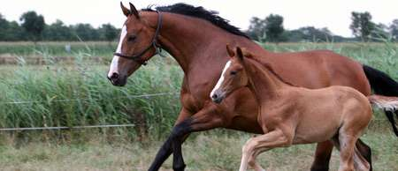 Mare and foal_brown