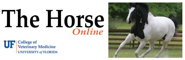Horse-website-Lacs