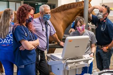 Mississippi horse recuperating well at home after treatment at UF to correct heart arrhythmia