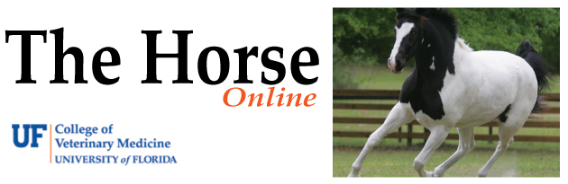 The Horse Online