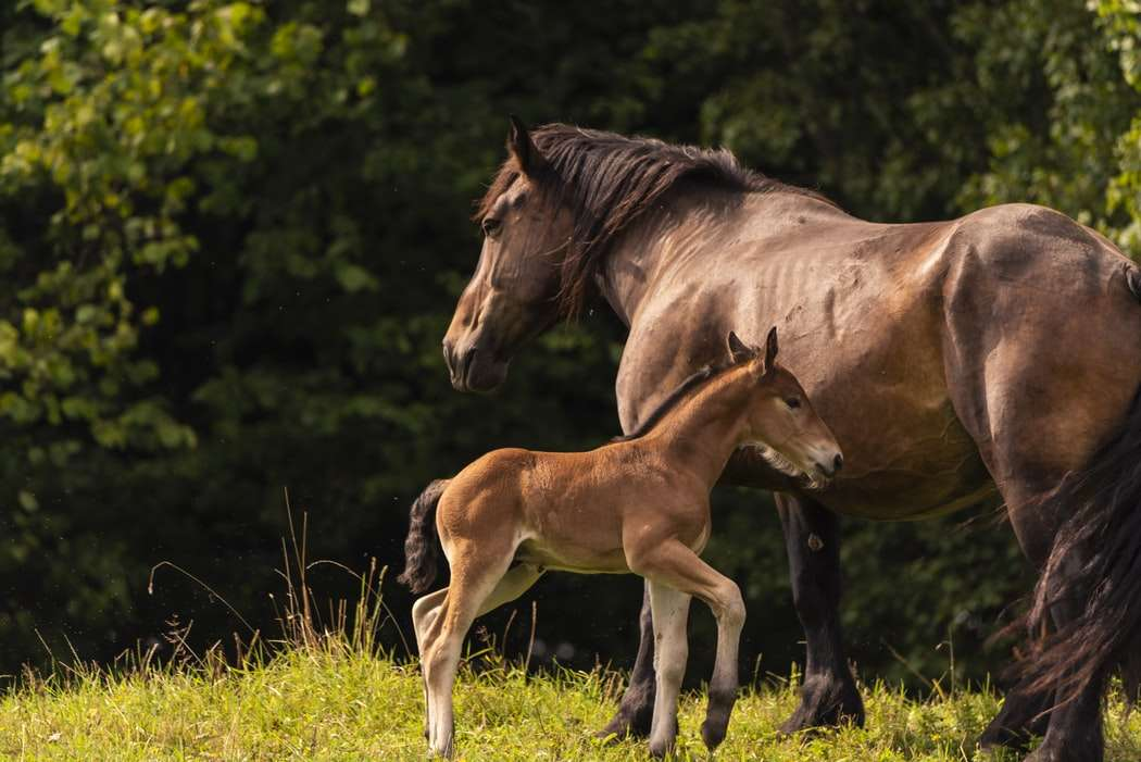 Foal and Mare in field