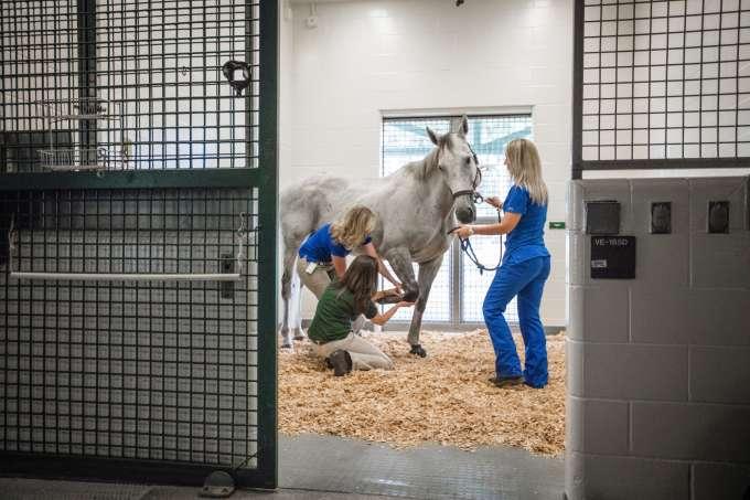 LACS horse medicine practices